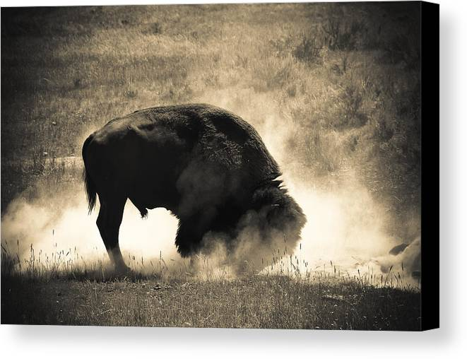 2011 Canvas Print featuring the photograph Testosterone by Andy-Kim Moeller