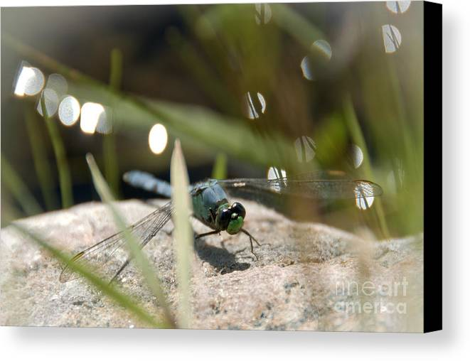 Dragonfly Canvas Print featuring the photograph Watching by Cheryl Baxter