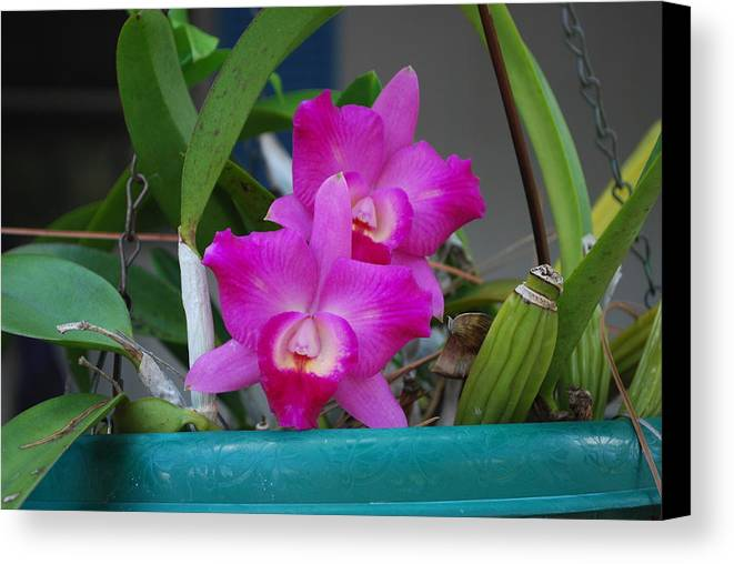 Growing On Patio Canvas Print featuring the photograph Orchid by Robert Floyd