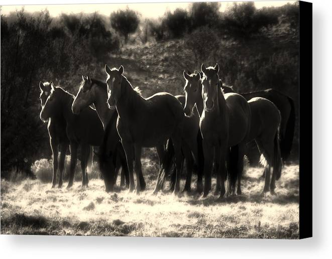 Wild Feral Horses Free Mustang Mustangs Horse Group Herd Desert high Desert new Mexico Nm Sw Southwest Southwestern Western new Mexico Jeep Tours Nmjeeptours.com roch Hart Canvas Print featuring the photograph A Morning Moment by Roch Hart