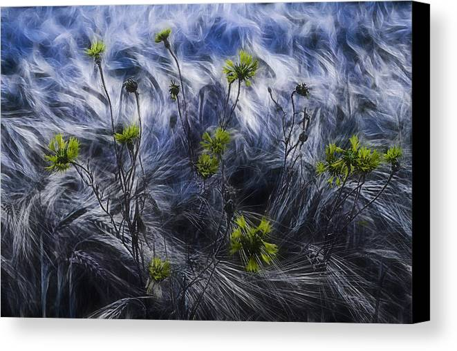 Cornflowers Canvas Print featuring the photograph Against The Wind by Joachim G Pinkawa
