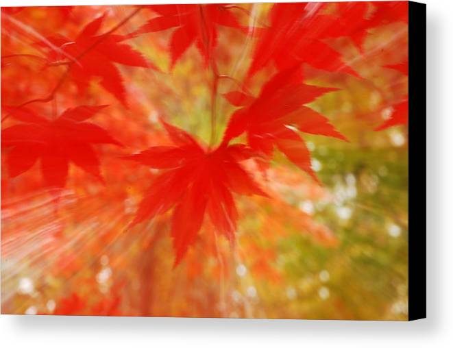 Autumn Canvas Print featuring the photograph Autumn Rush by Penny Parrish