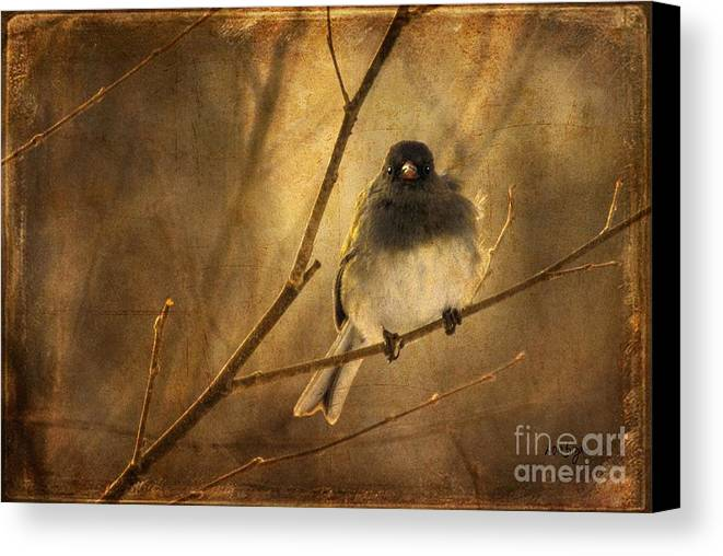 Bird Canvas Print featuring the photograph Backlit Birdie Being Buffeted by Lois Bryan