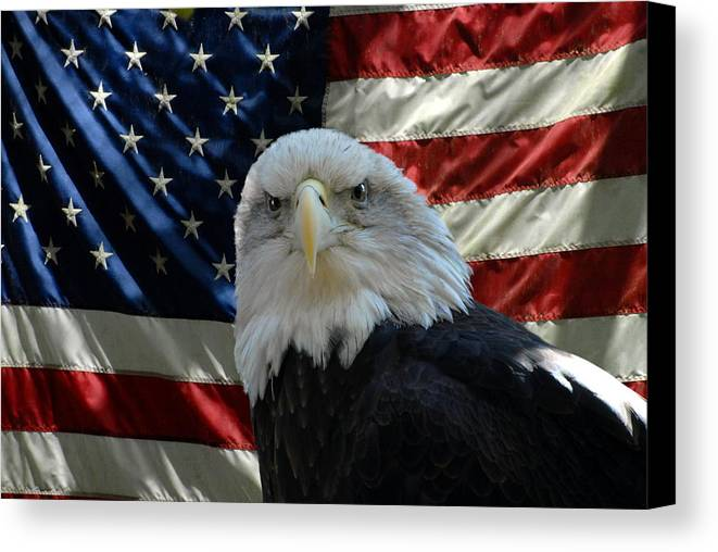 Bald Eagle Canvas Print featuring the photograph Bald Eagle 321 by Joyce StJames