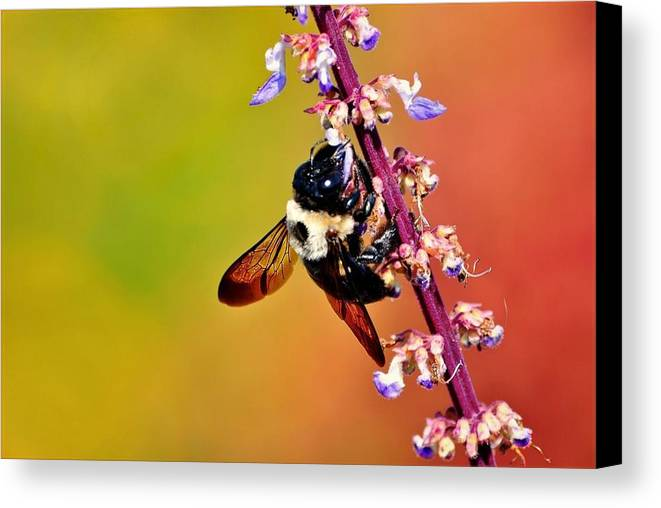 Flower Canvas Print featuring the photograph Bee by Jill Jacobs