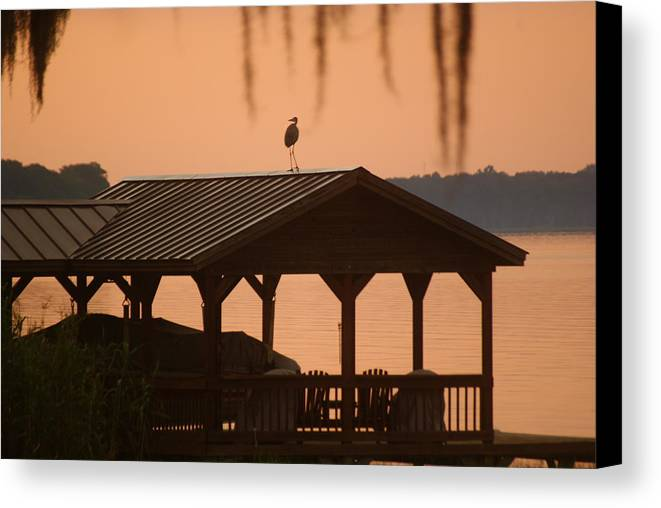 Nature Canvas Print featuring the photograph Bird On A Hot Tin Roof by Jack Mayer