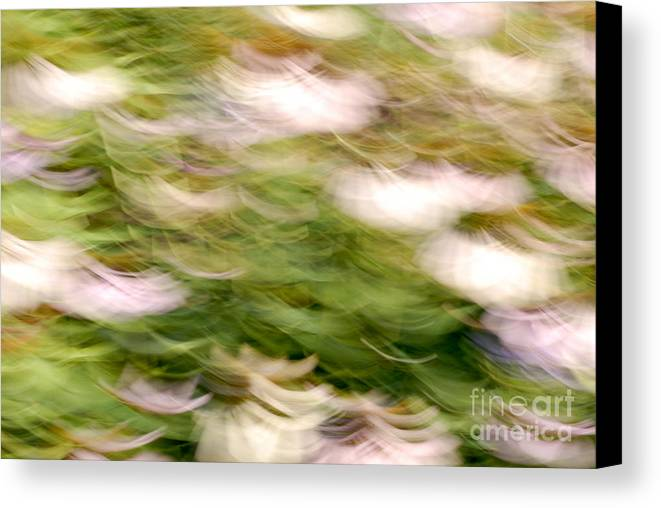 Blurred Motion Canvas Print featuring the photograph Coneflowers In The Breeze by Paul W Faust - Impressions of Light