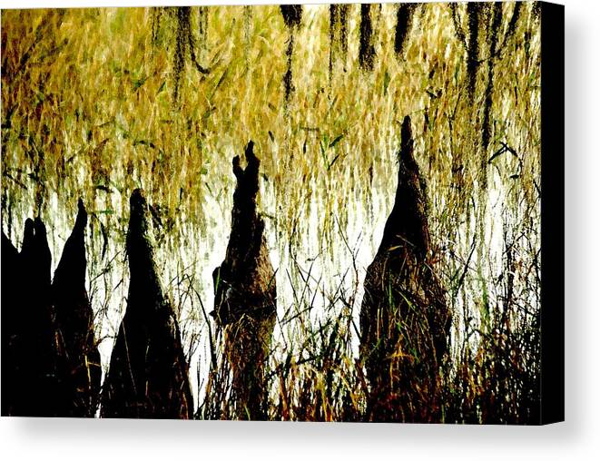 Cypress Canvas Print featuring the photograph Cypress Roots by Jack Mayer