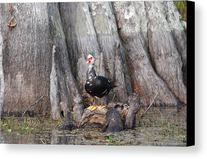 Duck Canvas Print featuring the photograph Duck On Knee by Brenda Romero
