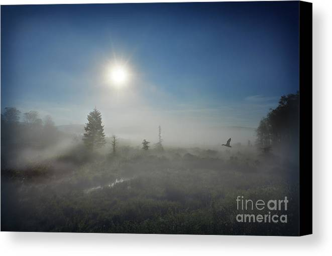 Morning Canvas Print featuring the photograph Early Morning Fog At Canaan Valley by Dan Friend