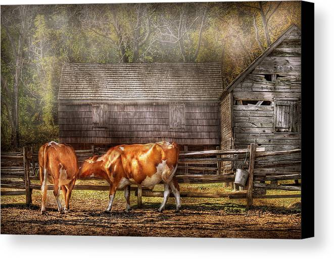 Savad Canvas Print featuring the photograph Farm - Cow - A Couple Of Cows by Mike Savad