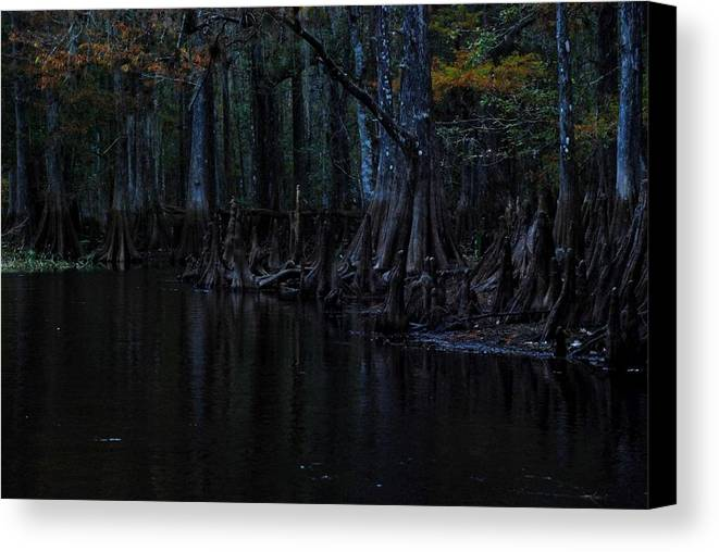Fisheating Creek Canvas Print featuring the photograph Fisheating Creek 28 by Carol Kay