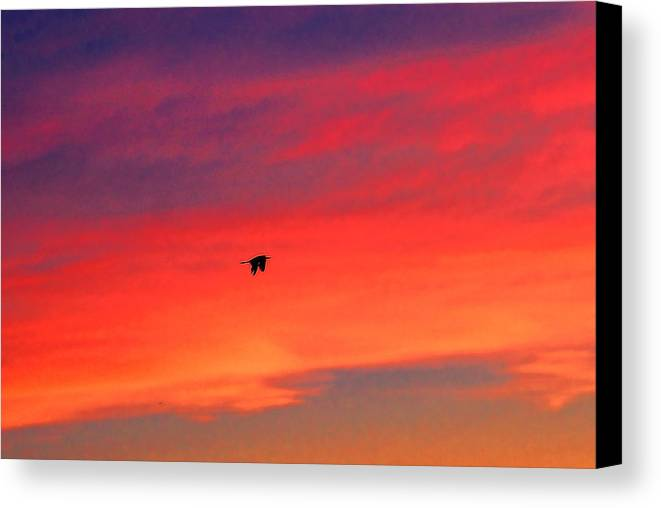 Heron Canvas Print featuring the photograph Heron Into The Sunset by Rick Friedle