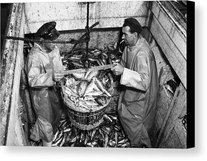 Fishing Canvas Print featuring the photograph Herring Fishing Howth 1955 by Irish Photo Archive