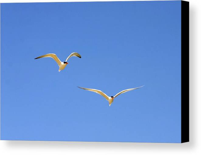 Birds Canvas Print featuring the photograph In Flight by My Lens and Eye  - Judy Mullan -