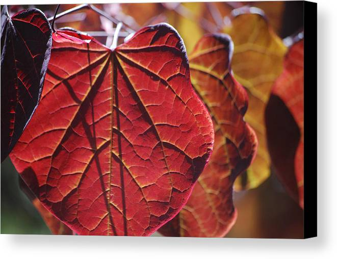 Becky Furgason Canvas Print featuring the photograph #leave by Becky Furgason