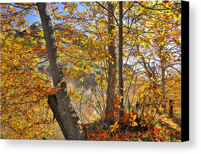 Landscapes Canvas Print featuring the photograph Light Days by Guido Montanes Castillo