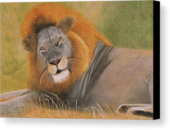 Male Canvas Print featuring the painting Lion At Rest by Olive Denyer