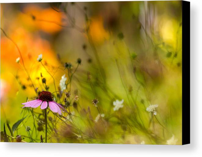 Cone Flower Canvas Print featuring the photograph Once Upon A Time There Lived A Flower by Mary Amerman