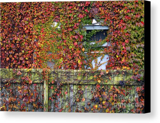 Historical Canvas Print featuring the photograph Over The Back Fence by Paul W Faust - Impressions of Light