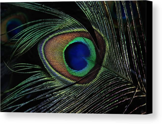 Animals Canvas Print featuring the photograph Peacock Eye by Joachim G Pinkawa