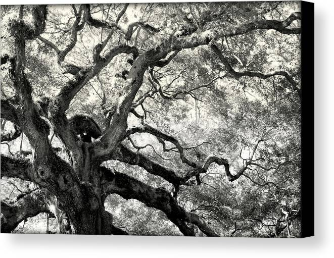 Abstract Trees Canvas Print featuring the photograph Reaching For Heaven by Karen Wiles