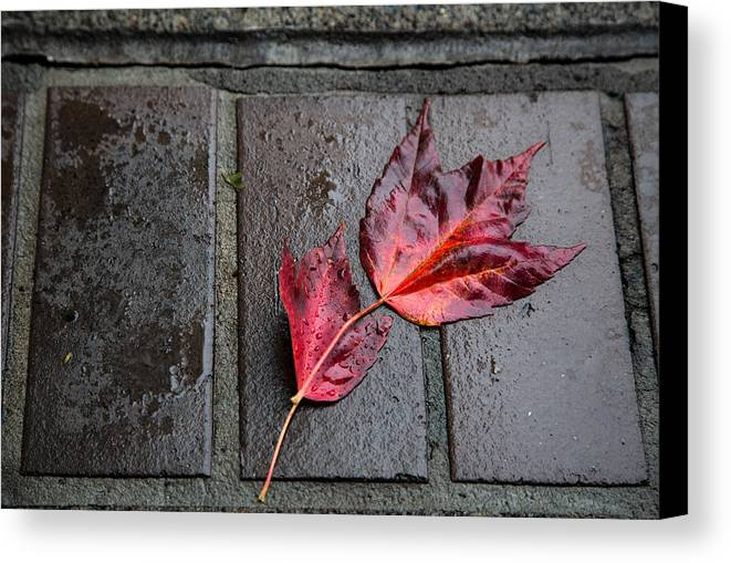 Maple Canvas Print featuring the photograph Red Maple Bricks by John Daly