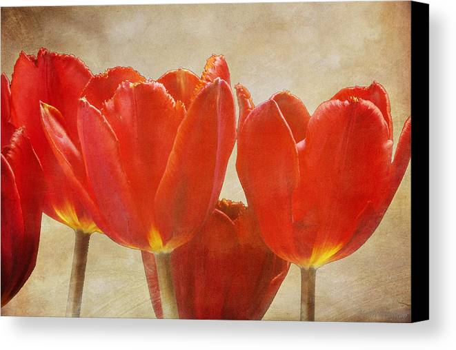 Fine Canvas Print featuring the photograph Red Tulips In Art by Keith Gondron
