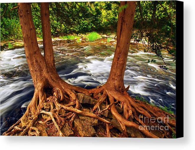 Water Canvas Print featuring the photograph River by Elena Elisseeva