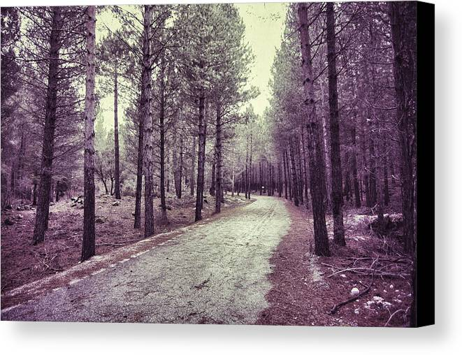 Retro Canvas Print featuring the photograph The Forest Road Retro by Guido Montanes Castillo