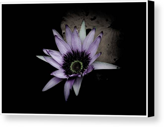 Abstract Canvas Print featuring the photograph Water Lily 4 by Gail Stephenson