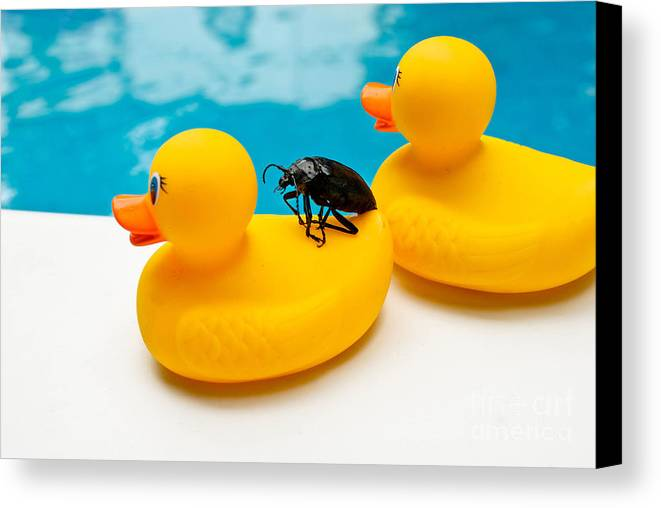 Absurd Canvas Print featuring the photograph Waterbug Takes Yellow Taxi by Amy Cicconi