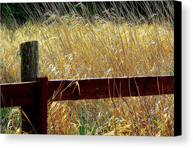 Fence Canvas Print featuring the photograph Wheat N' Fence by Annie DeMilo