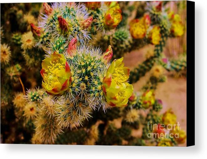 Whipple Cholla Canvas Print featuring the photograph Whipple Snake by Angela J Wright