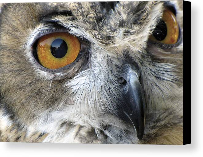 Owl Canvas Print featuring the photograph Who by Bob Slitzan