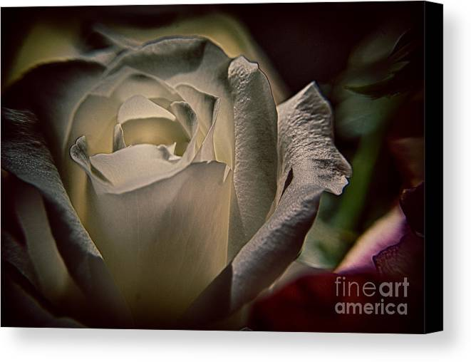 Inner-strength Canvas Print featuring the photograph You Light Up My Life by Patricia Trudell