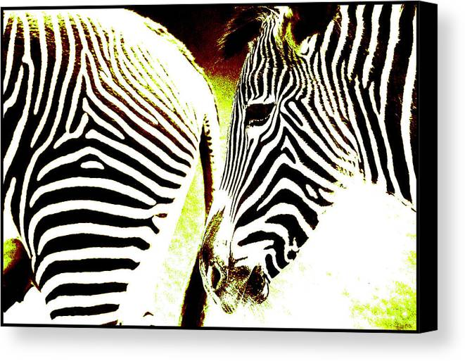 Zebra Head Tail Design Stripes Animal Eye Canvas Print featuring the photograph Zebras by Dick Swift