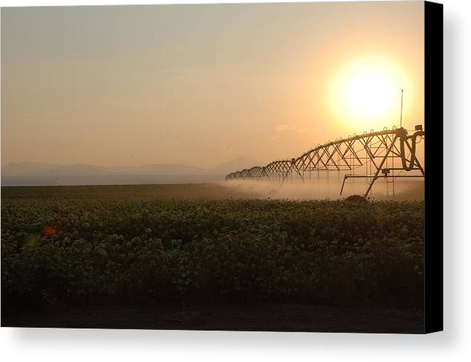 Sprinkler Canvas Print featuring the photograph Farm Sunset by Linda Larson