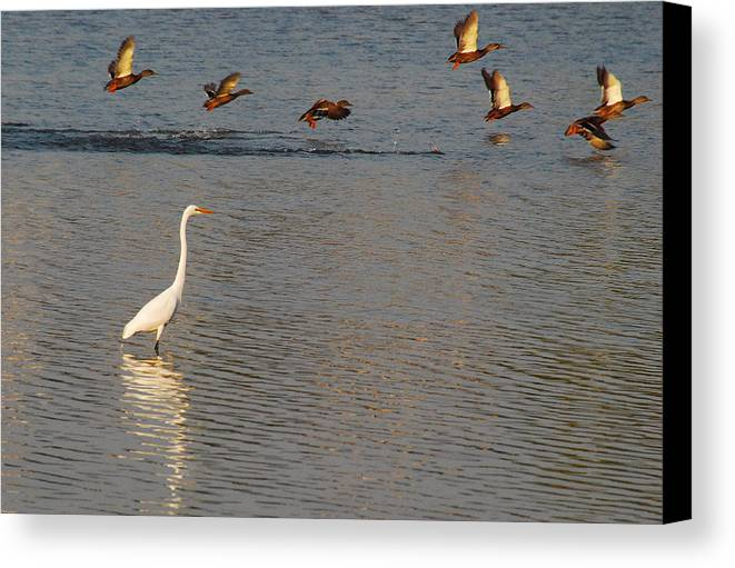 Marshall Canvas Print featuring the photograph Take Off 3 by Janice Adomeit