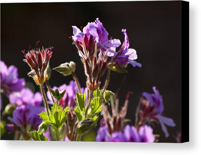 Wild Flowers Canvas Print featuring the photograph Wild Flowers by Manolis Tsantakis