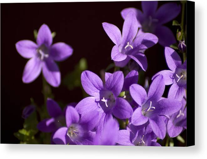 Wild Flowers Canvas Print featuring the photograph Wild Flowers by Manolis Tsantakis