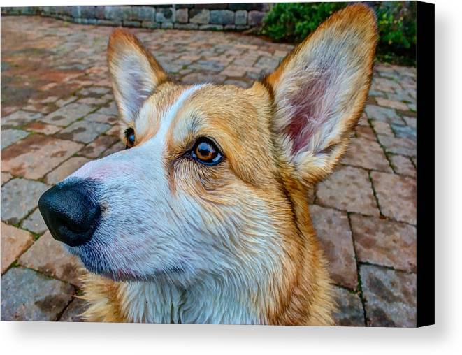 Freddy Canvas Print featuring the photograph Freddy Hdr by Mike Horvath