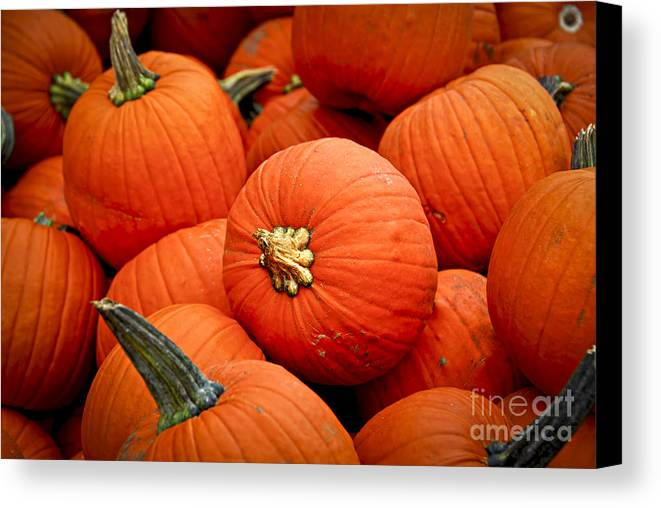 Fall Canvas Print featuring the photograph Pumpkins by Elena Elisseeva