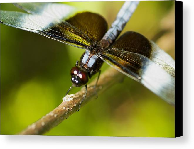 Macro Canvas Print featuring the photograph Macro by Jack Zulli