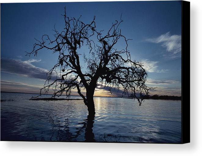 Scenes And Views Canvas Print featuring the photograph A View At Dawn Of A Silhouetted Tree by Jason Edwards