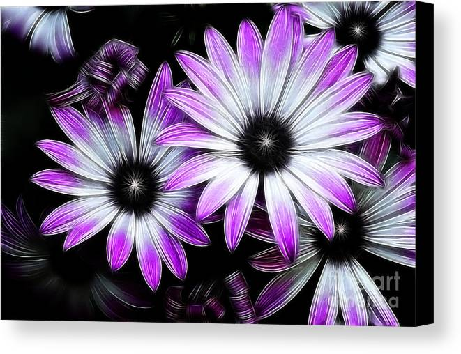 Flowers Canvas Print featuring the photograph Africian Daisy by Carol A Commins