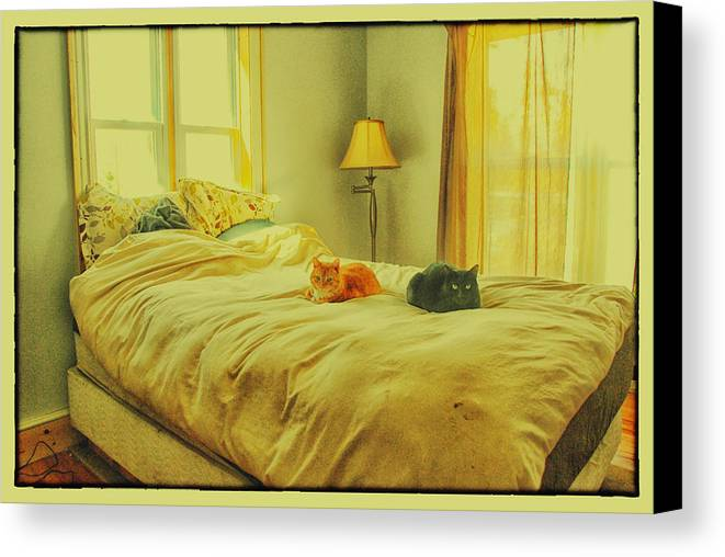 Feline Canvas Print featuring the photograph Andi's Cats by Kimberleigh Ladd