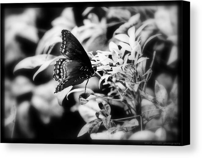 Black And White Canvas Print featuring the photograph B N W Butterfly by Sheri Bartoszek