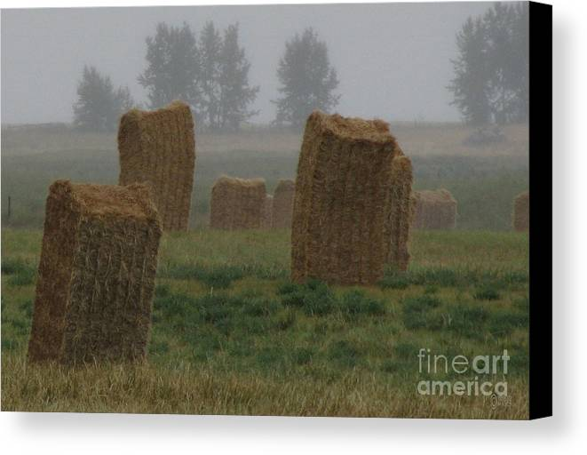Landscapes Canvas Print featuring the photograph Bales For Sails by Maurice Beebe