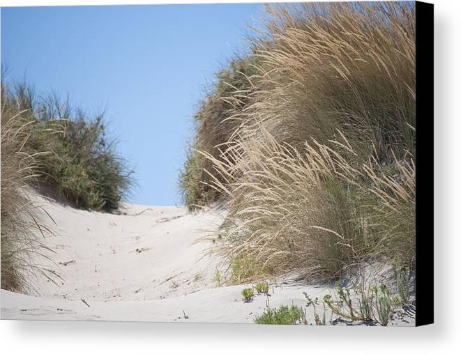 Beach Canvas Print featuring the photograph Beach Sand Dunes II by Michelle Wrighton